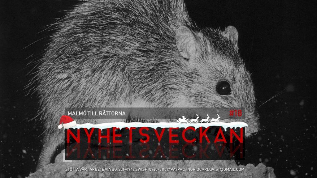 Nyhetsveckan #18 – Malmö till råttorna